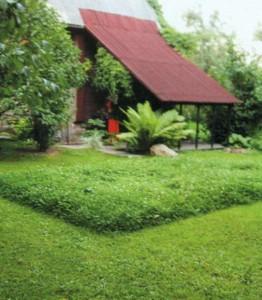 Полуторамесячный прямоугольный «коврик»
