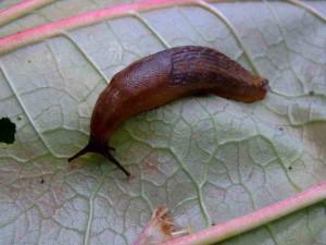 Вредитель на листве