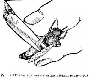 Процесс обрезки крыльев матки
