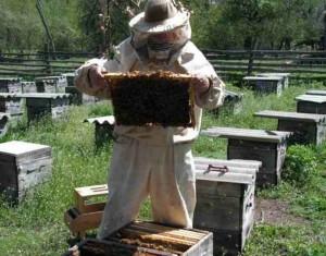Труды пчеловода на пасеке