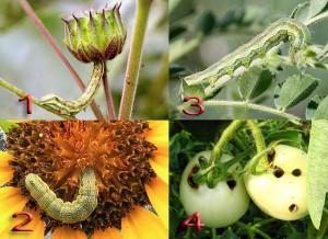 Типы повреждения садовых растений