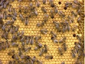 Пчелиное семейство