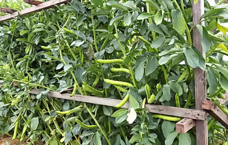 Уход за растениями на даче