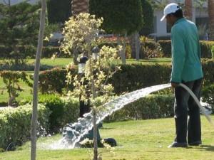 Процесс полива растений на даче