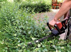 Садовая обрезка