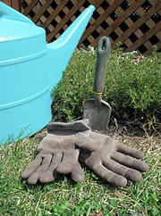 Основные ошибки садоводов