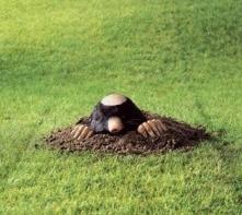 Болезни и вредители газона