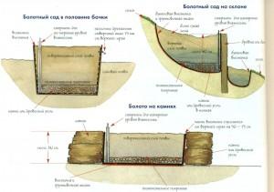 Схема устройства болотного сада