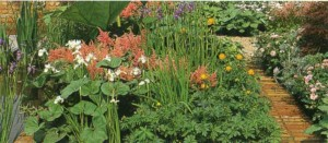 Ухоженный болотный сад