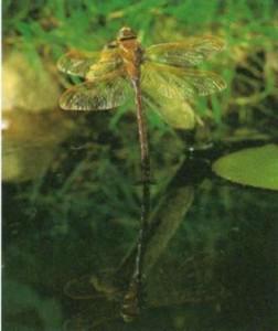 Посадка растений в живом пруду