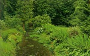 Зеленая лужайка среди деревьев
