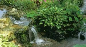 Озеленение садового каскада