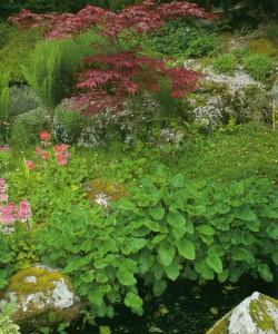 Посадки в каменистом саду