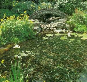 Дизайн восточного сада