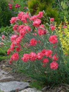 Цветущая клумба в саду
