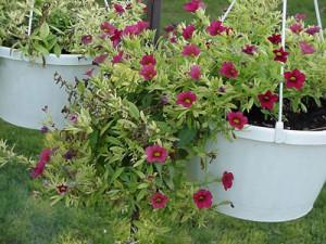 Горшки с цветами в саду