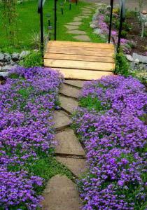Ковер из цветов вдоль садовой дорожки