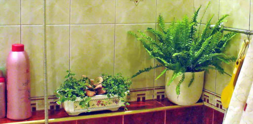 Растения на фоне глянцевой плитки