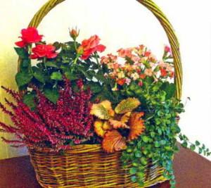 Подарочная корзина с живыми цветами