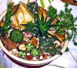 Цветочная композиция из комнатных растений «Яшмовый сад»