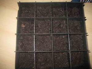 Выращивание георгин