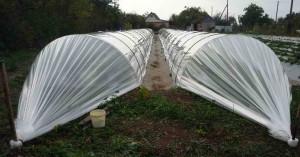 Выращивание растений под пленкой