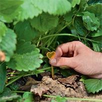 Отмечаем растения для размножения