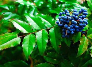 Растение в летний период