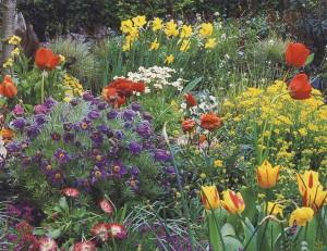 Многообразие цветов на даче