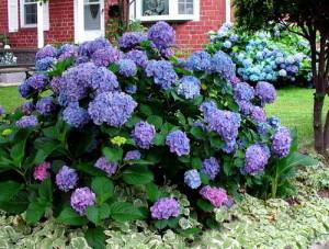 Необычный окрас цветков