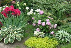 Цветы в полутени