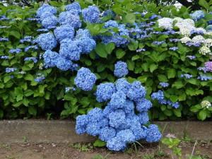 Необычный окрас цветов