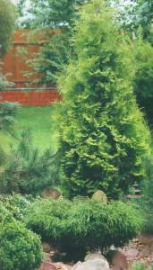 Деревья для сада в азиатском стиле