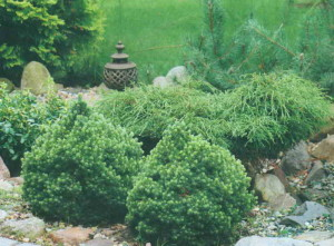 Зеленый островок на даче