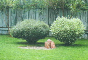 Кустарники на садовой лужайке