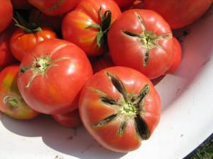 Неравномерная поверхность томатов