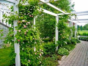 Выращивание садовой ягоды
