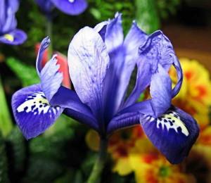 Невероятной красоты цветок