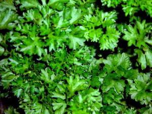 Зелень на грядке