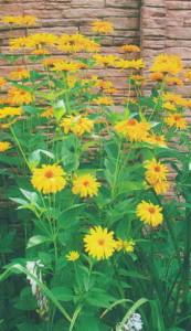 Цветы для высадки в саду
