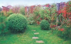 Фруктовые деревья и плодовые кустарники