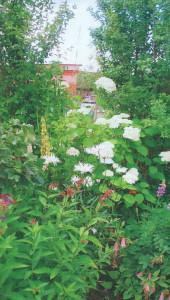 Вариант планировки огорода