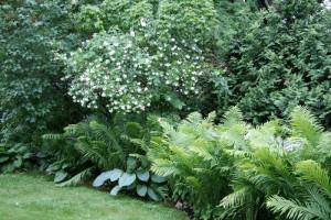 Стрижка декоративно-листвяных кустарников