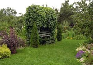 Лавка под аркой из декоративного кустарника