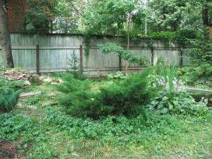 Зеленый уголок в саду