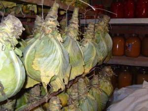 Древний способ хранения капусты