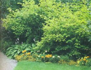 Кустарники в саду