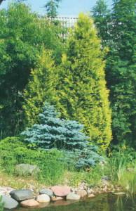 Деревья на дачном участке