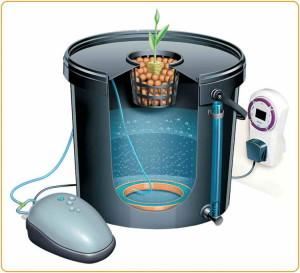 Устройство для выращивания растений