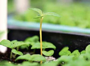 Неравномерный рост
